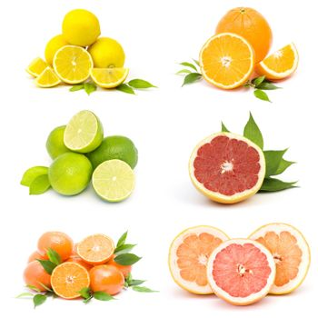 collection of fresh citrus fruit
