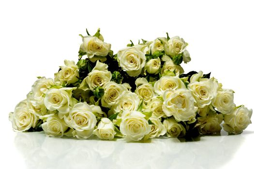 The photo shows roses on a white background