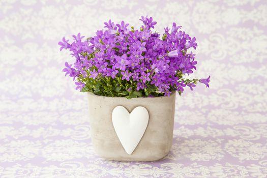 Bellflowers in a pot