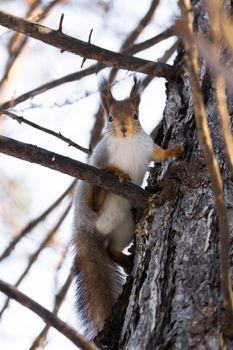 The photograph shows a squirrel near a tree