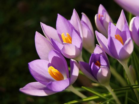 Colourful Spring Flowers.