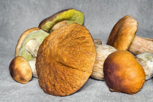 Some large edible mushrooms.