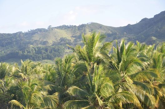 Dominican Republic Landscape with palm  trees in foreground