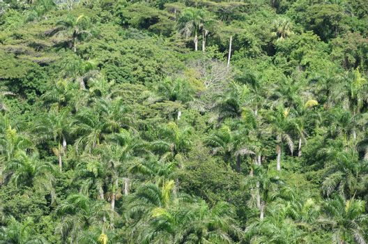 Thick Palm trees from above