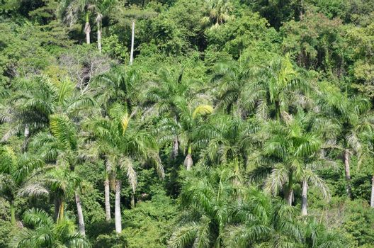 Group of Palm trees viewed  from above