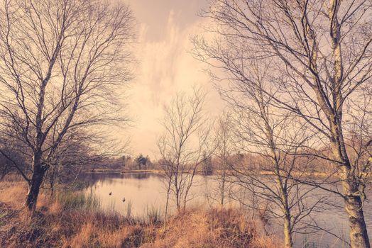 Idyllic lake with ducks