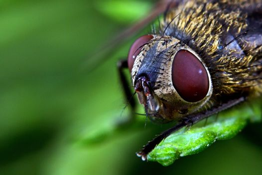 Bee, a close-up