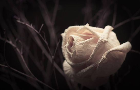 Withered white rose with branches on dark background