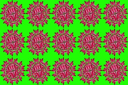 Redbird Cactus