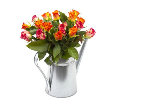 roses in a watering can on white background