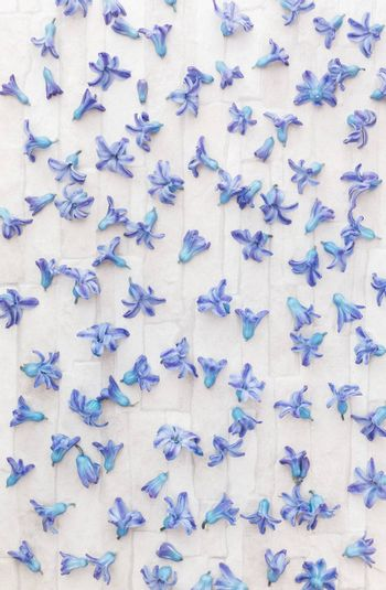 Blue Hyacinth flowers scattered randomly on rustic background. Overhead view