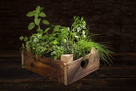 Various herbs in wooden vintage crate. Culinary aromatic herbs, basil, coriander, mint, rosemary, thyme and chive.