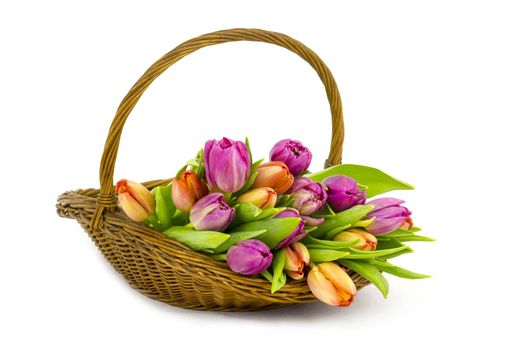 colourful tulips in a basket