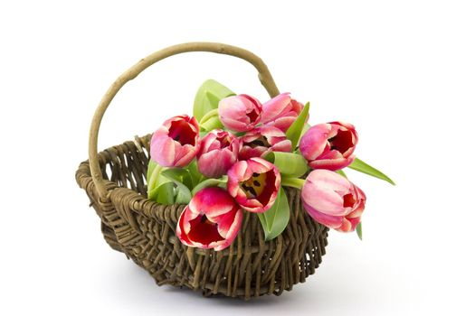 red tulips in a basket
