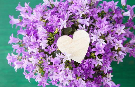 Purple bellflowers