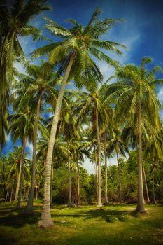 in tropic