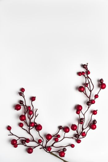 Red berries holly on white