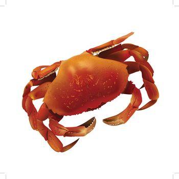 Sea Crab Illustration