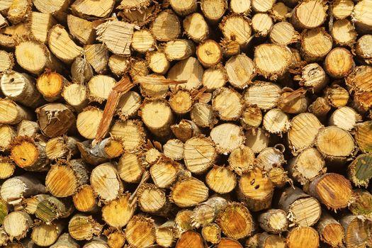 natural wooden logs