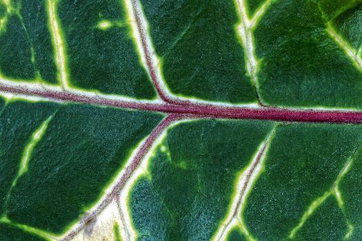 Green leaf, a background