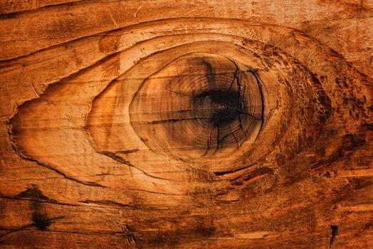 Old oak board wood knot