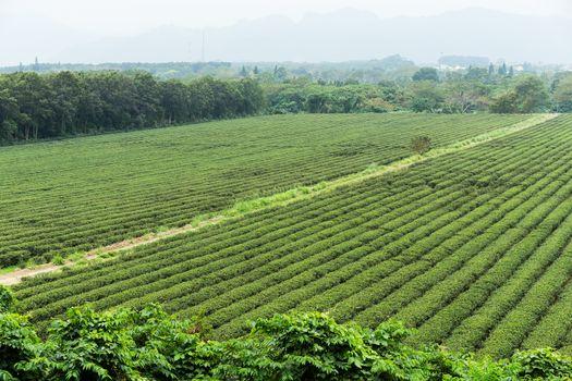 Water supply for green tea farm in TaiTung, TaiWan