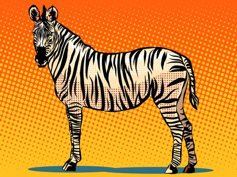 African Zebra animal