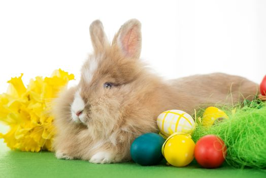 Easter Bunny with eggs and flower. Selective focus. Focus on rabbit.