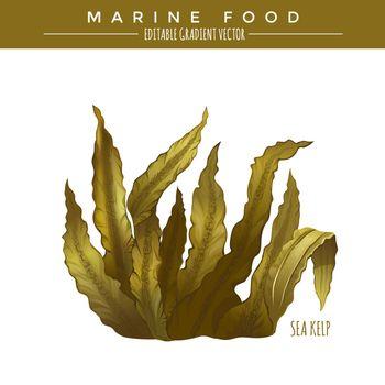 Sea Kelp. Marine Food
