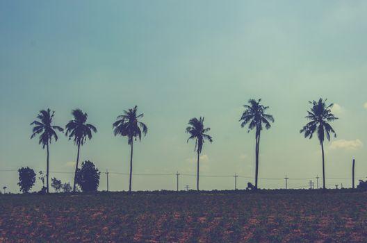 Vintage tropical palm trees