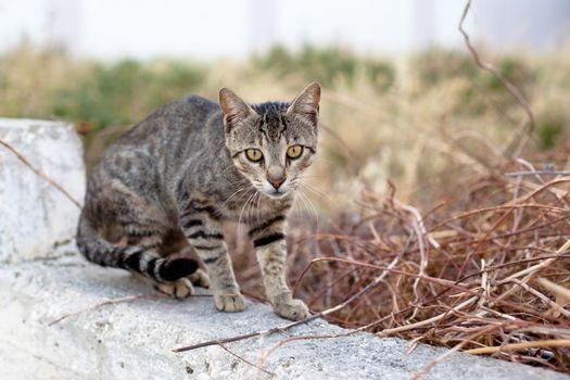 Outdoor cat