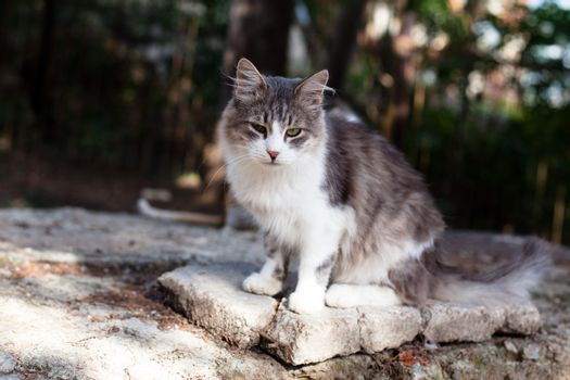 Sorrow white and grey cat sitting on a stone