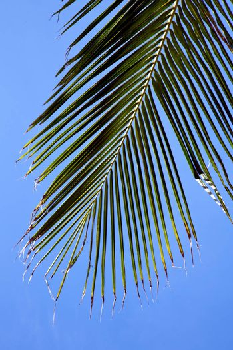 bark in kho tao   bay asia isle white   tree    and sky