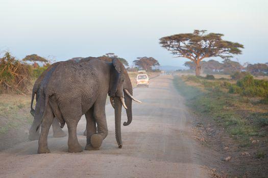 Family of elephants on dirt roadi in Amboseli