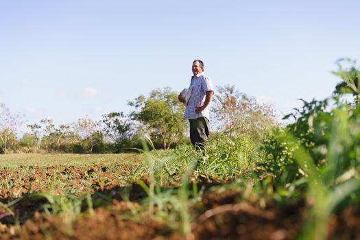 Portrait Man Farmer Standing In Tomato Field Looking Away