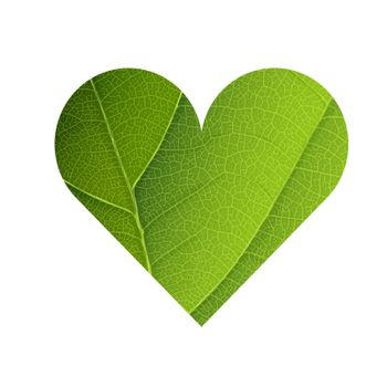 Green Leaf Veins Texture Heart Shaped. Earth Day Concept Design.