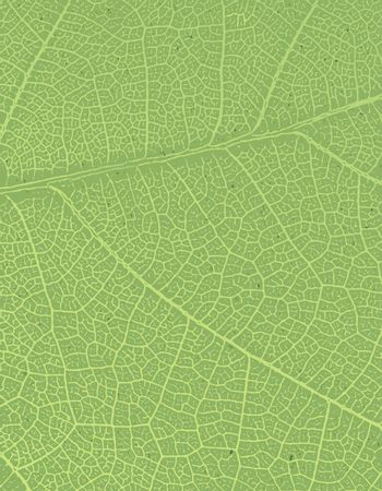 Nature background with free space for text or image. Green leaf
