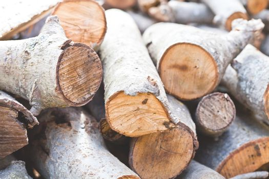 dry chopped firewood