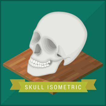 Human skull flat isometric. Cranium
