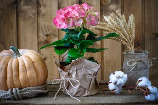 Beautiful flowers on a background of wooden boards