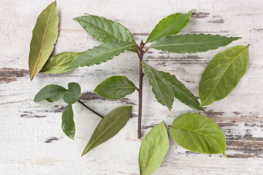 Bay leaves on white wooden background. Bay leaves, culinary and medical herbs on white wooden table, top view.