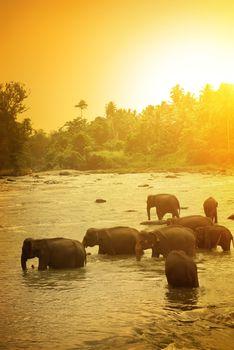 Elephants and bright sunrise