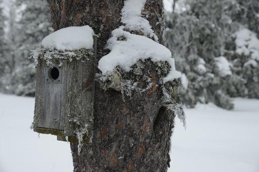 Birdhouse with Snow in a Winter Garten