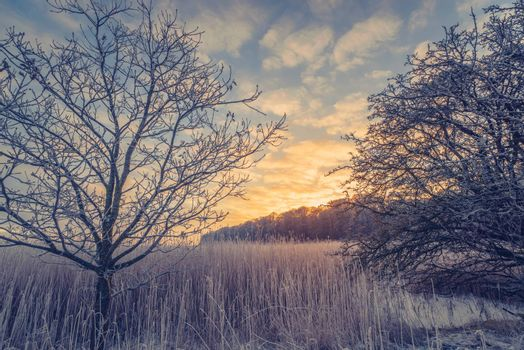 Countryside winter landscape with trees in the sunrise