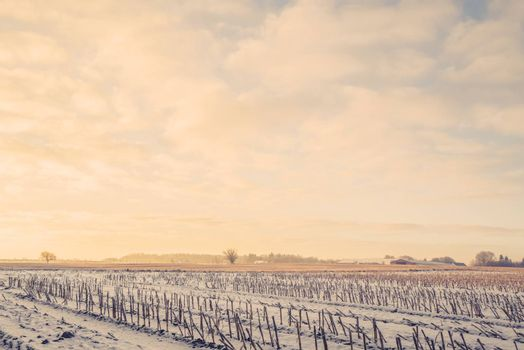 Countryside landscape in the wintertime