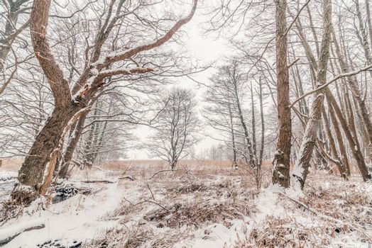 Forest at wintertime with snow