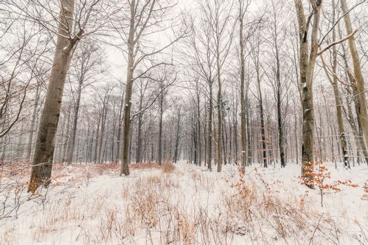 Scandinavian forest in the snow