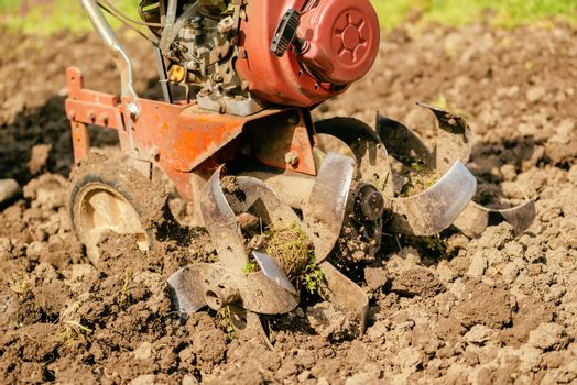 Preparing garden soil with cultivator tiller