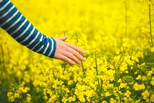 Female hand touching gentle blooming rapeseed crops