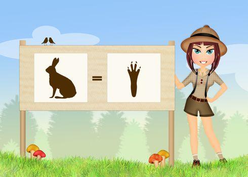 footprint hare